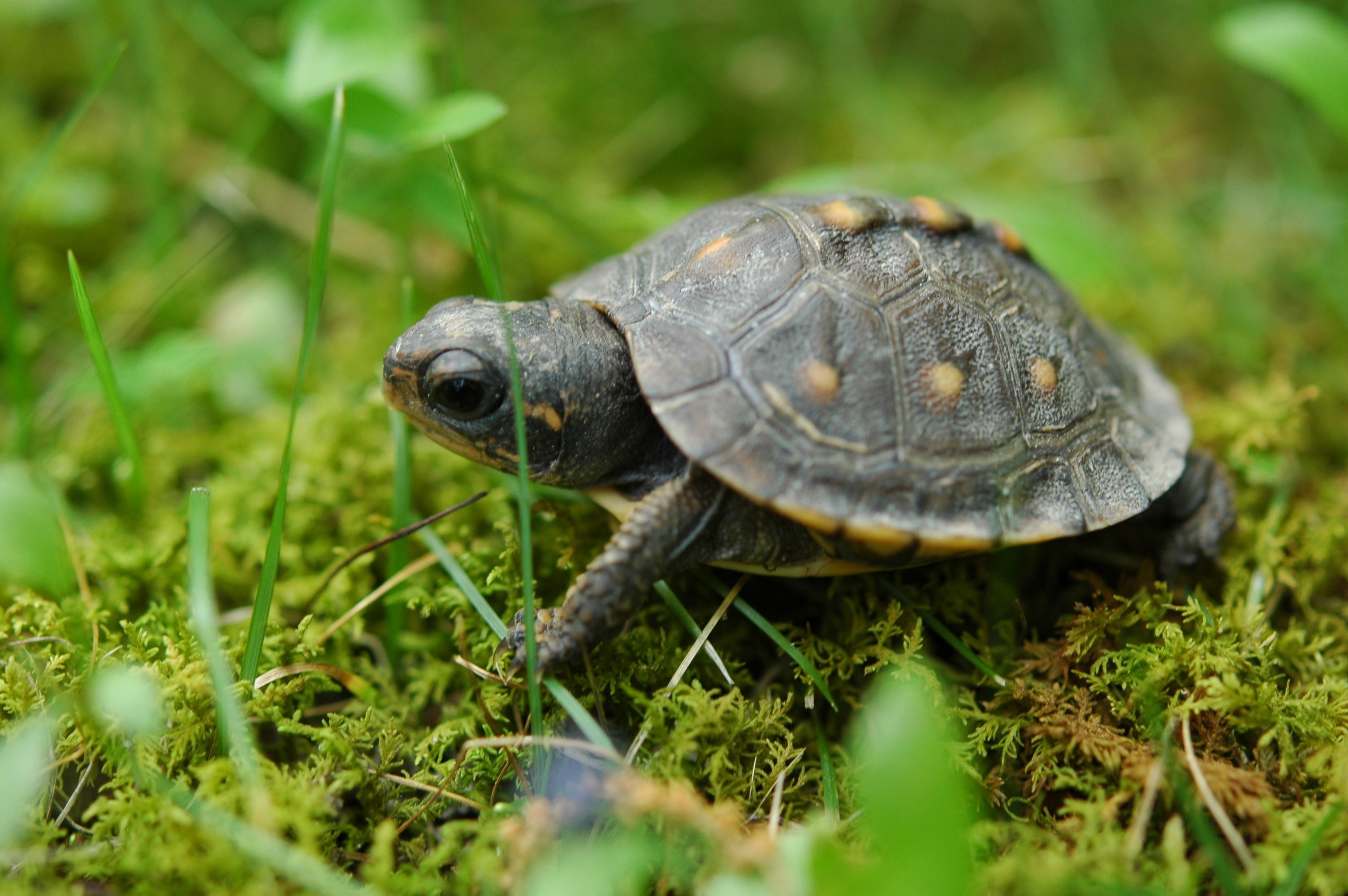 This is the Reason Your Turtle Tank Gets Cloudy - TurtleHolic