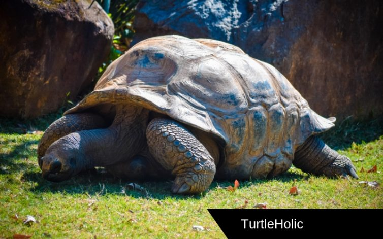 Large Turtles Content