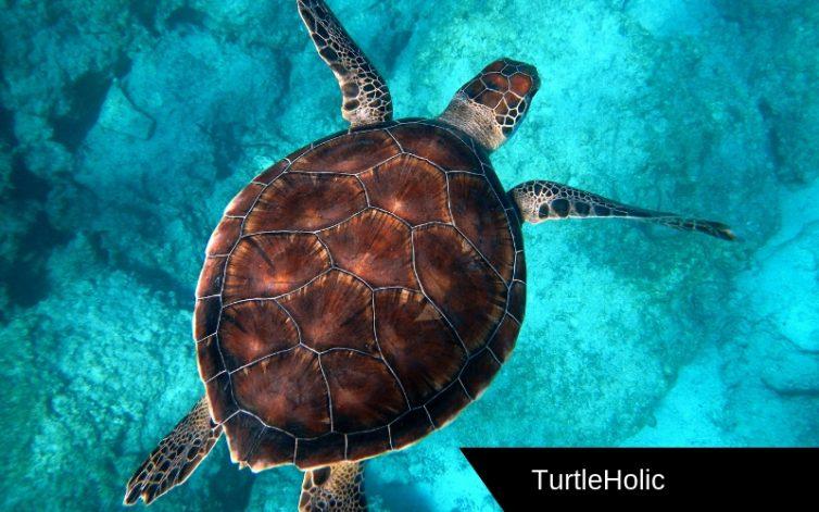 Sea Turtle Content 2