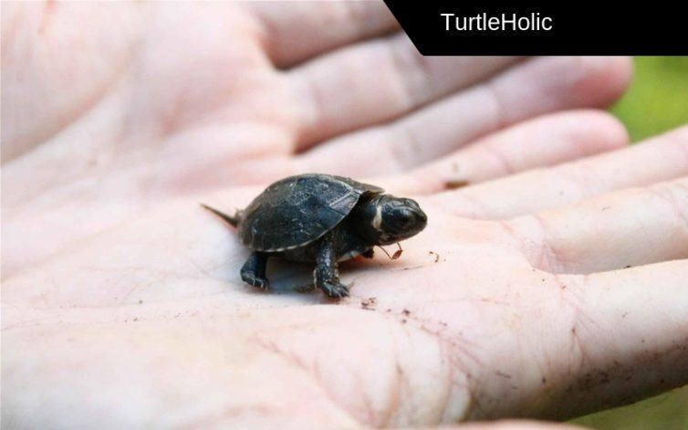 Small Turtles Content