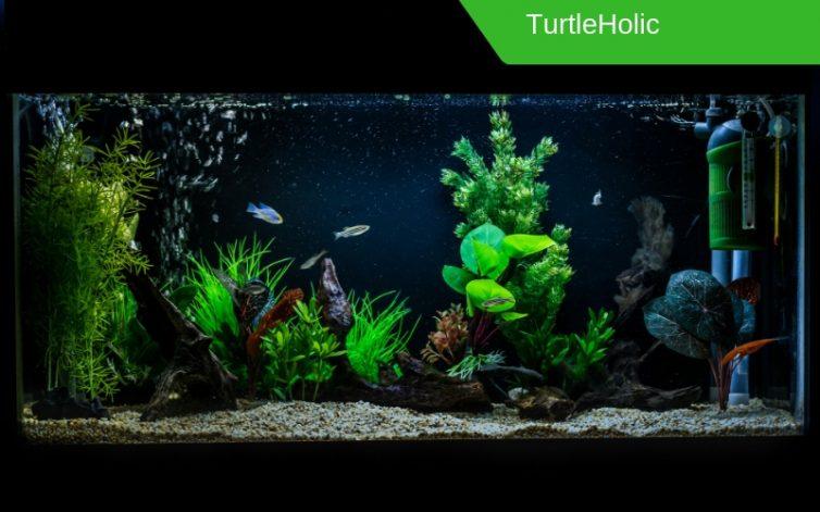 aquarium content 1