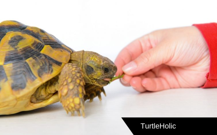 best automatic turtle feeder content