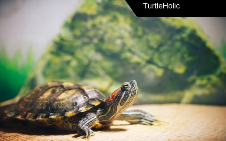 best turtle dock large turtles content
