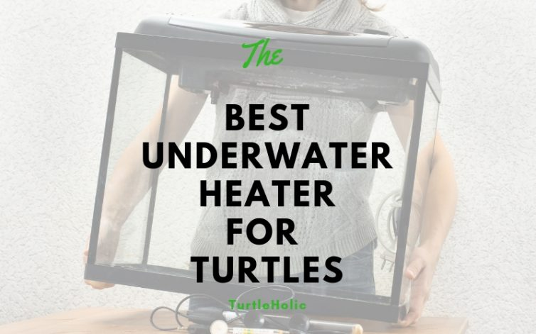 best underwater heater for turtles main