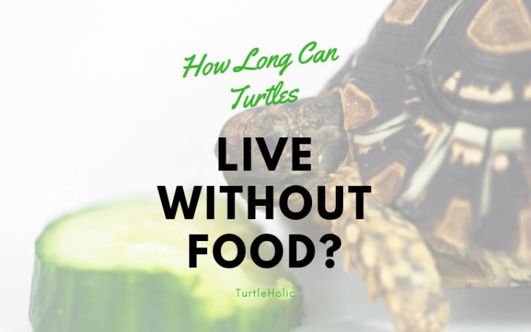 how long can turtles live without food main