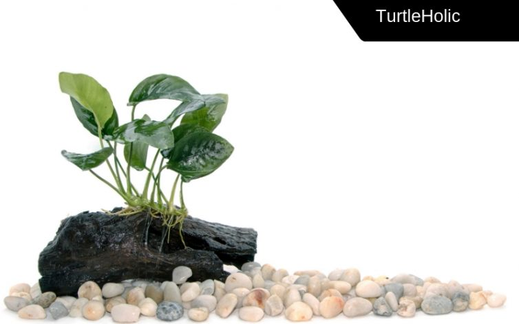 the guide to plants for turtle tanks turtleholic