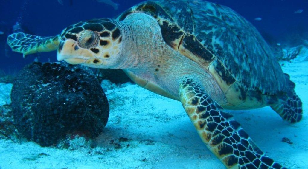 sea turtle info featured