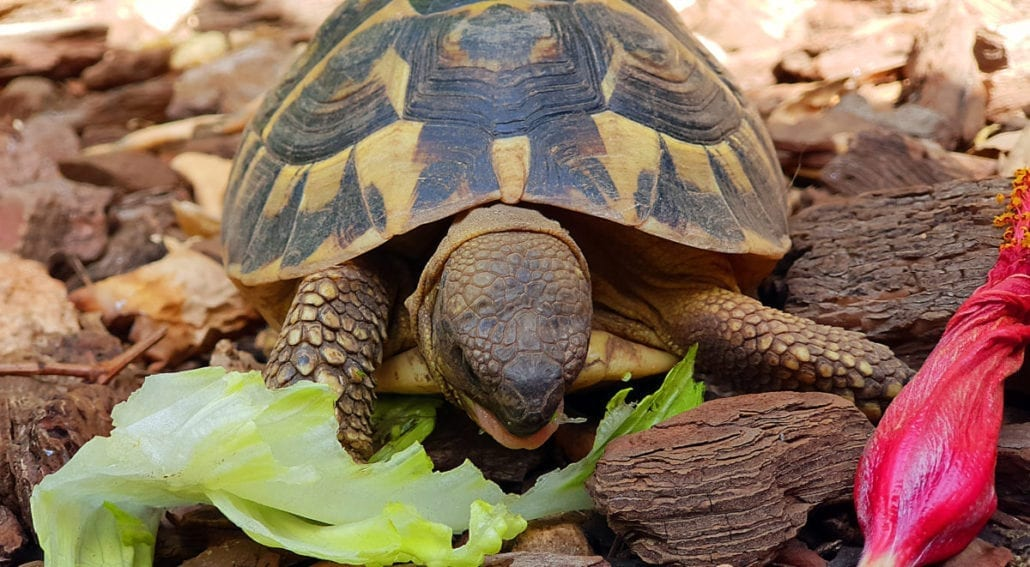 the best turtle food featured