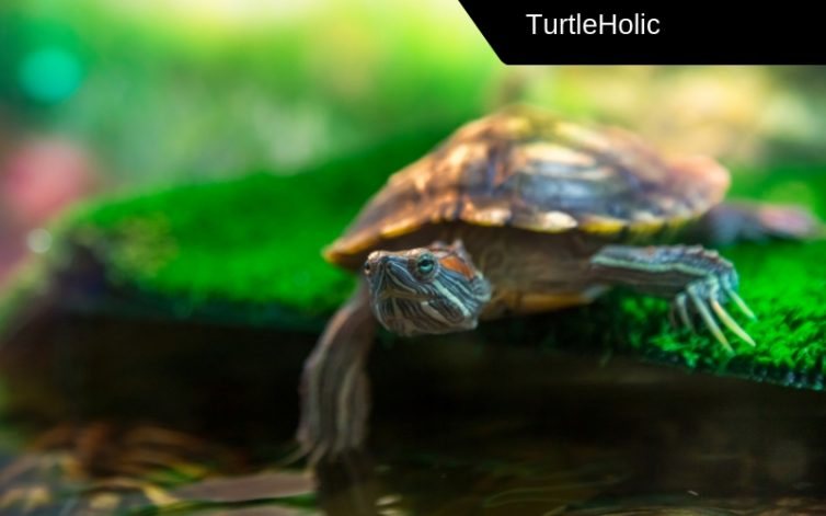 the best turtle light bulb content