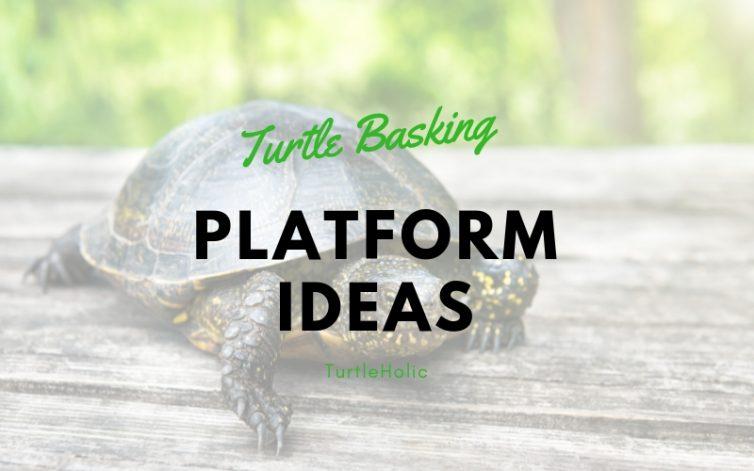 turtle basking platform ideas turtleholic