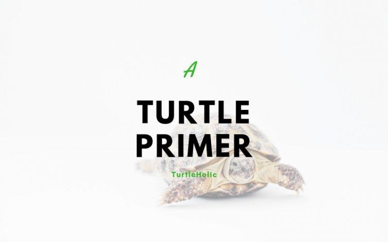turtle primer main
