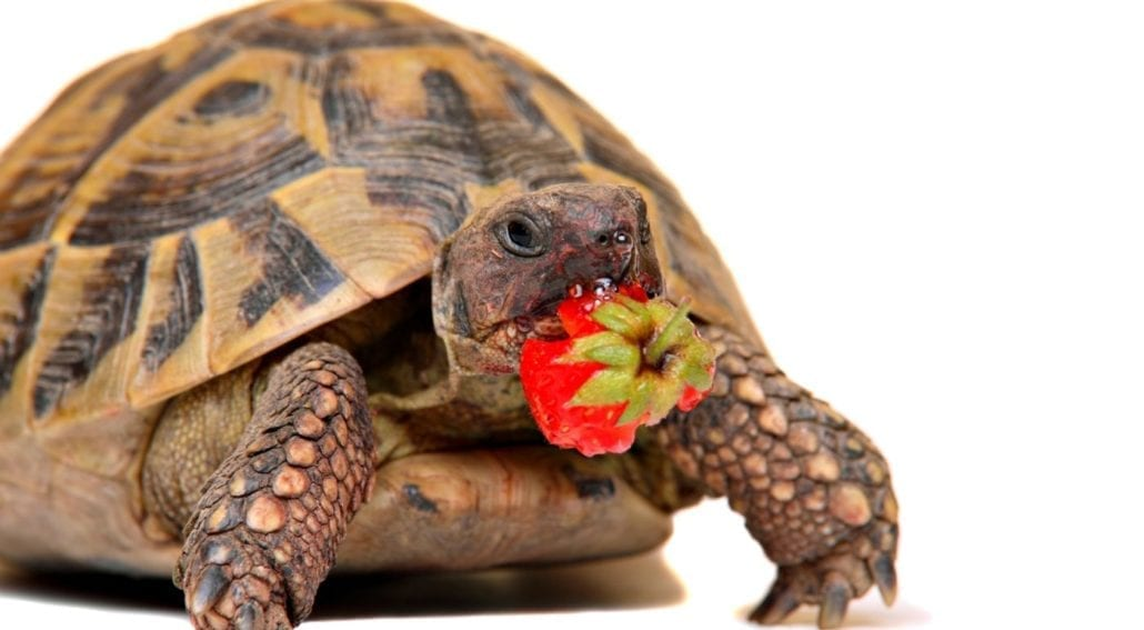 what do turtles eat featured