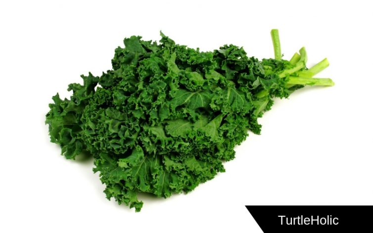 Kale Great Source of Calcium for Turtles
