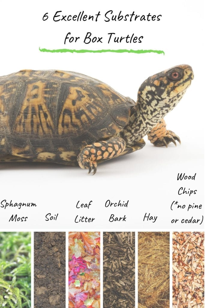 The Best Substrate For Box Turtles In The World Turtleholic