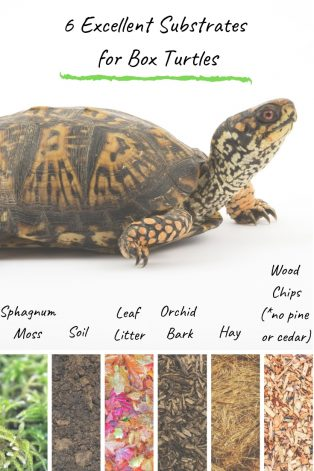 6 Great Excellent Substrates for Box Turtles