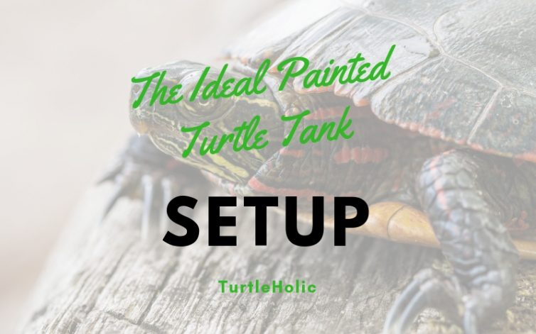Ideal Painted Turtle Tank Setup main picture