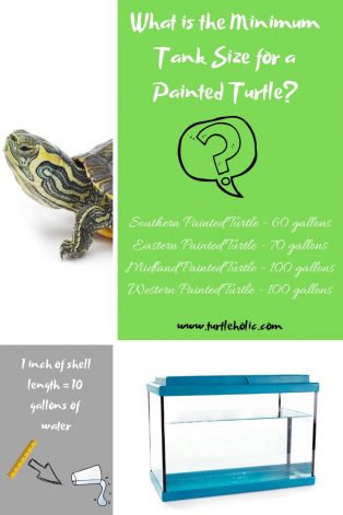 What is the Minimum Tank Size for a Painted Turtle_