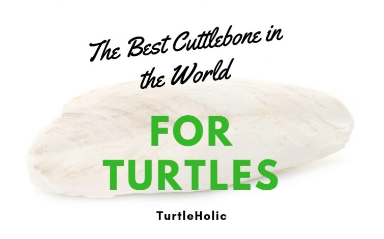 Best Cuttlebone in World for Turtles main