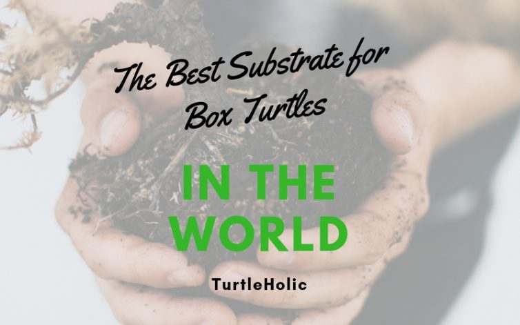 Best Substrate Box Turtles in World main