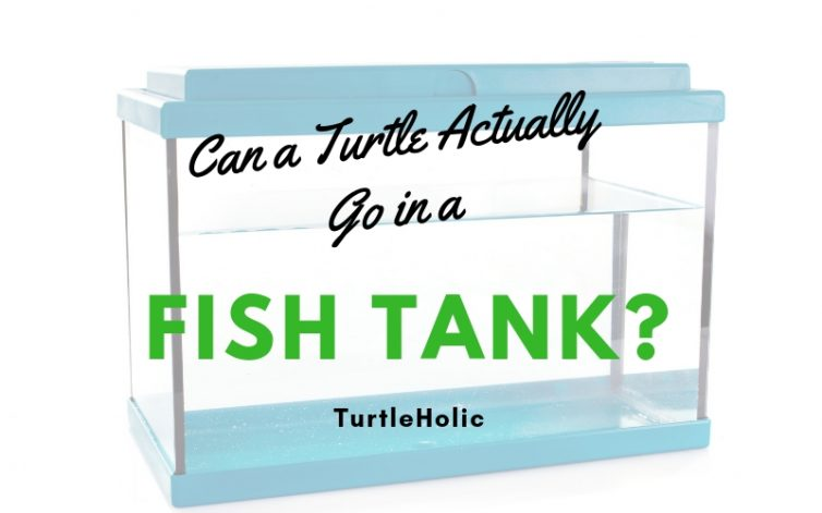 Can Turtle Actually Go In Fish Tank main