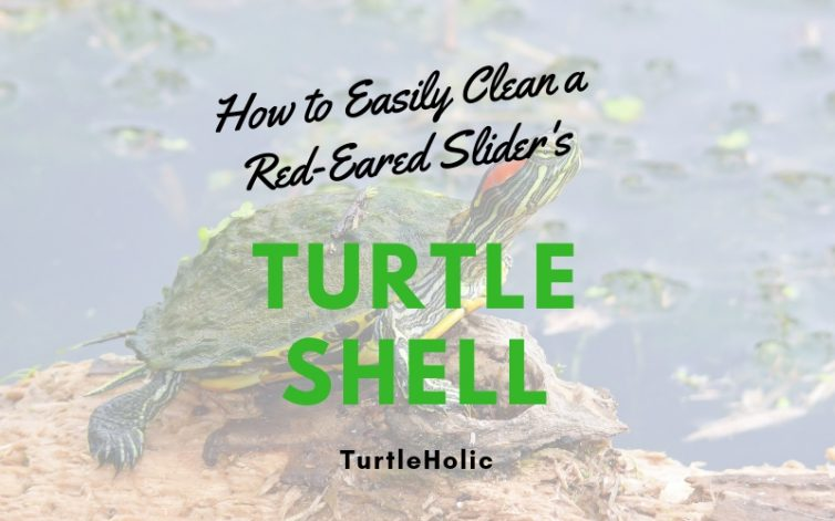 How Easily Clean Red Eared Sliders Turtle Shell main