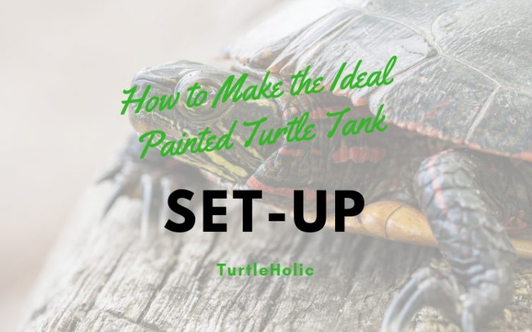 How Make Ideal Painted Turtle Tank Setup main