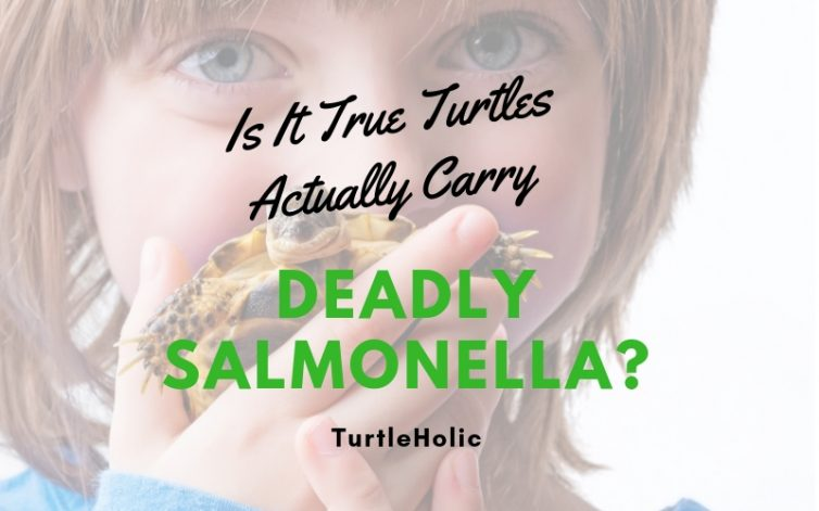 Is It True Turtles Carry Deadly Salmonella main