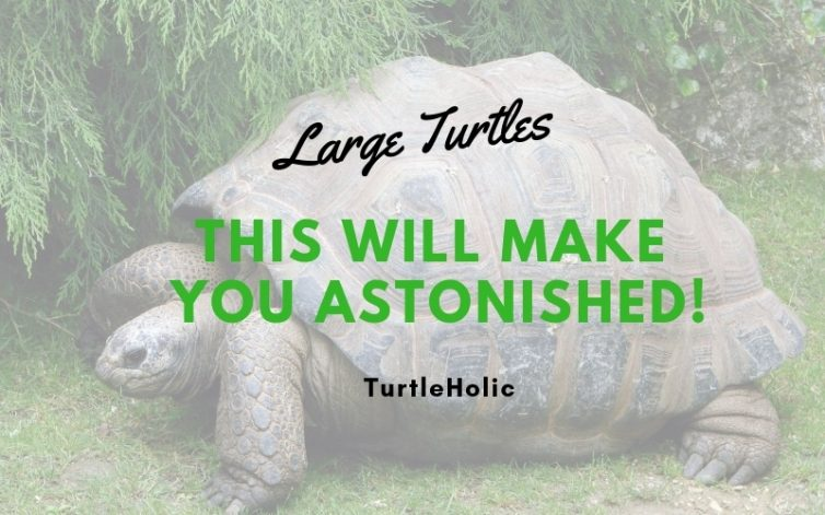 Large Turtles This Will Make You Astonished main picture
