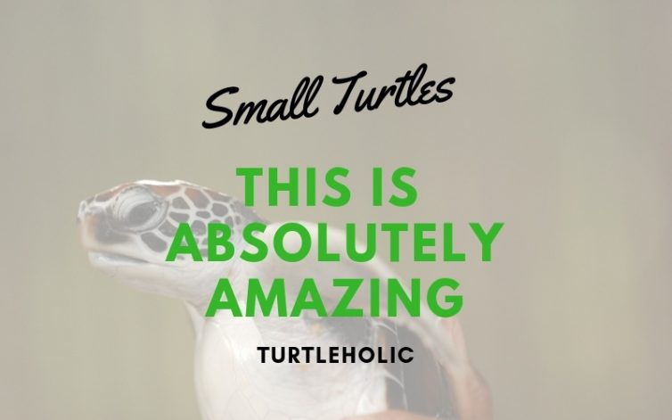 Small Turtles This is Absolutely Amazing main picture