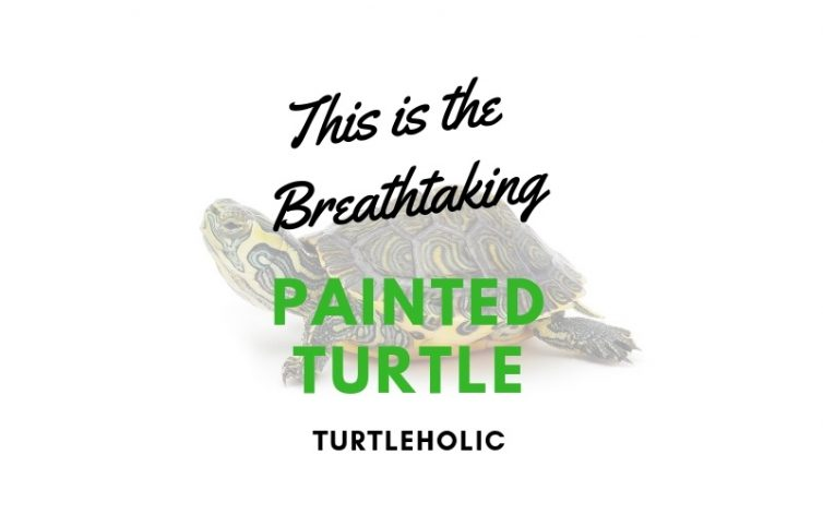 This is the Breathtaking Painted Turtle main picture