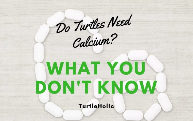 Turtles Need Calcium What Dont Know main