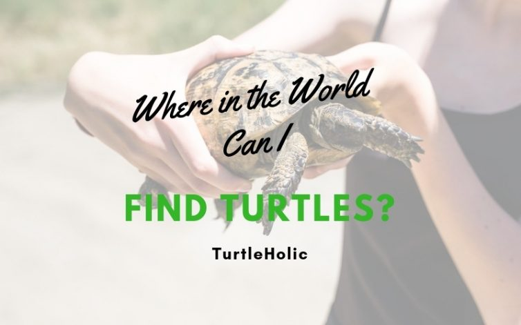 Where in the World Can I Find Turtles main
