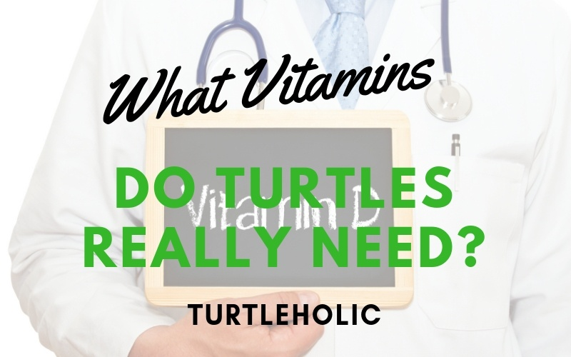 What Vitamins Do Turtles Really Need picture