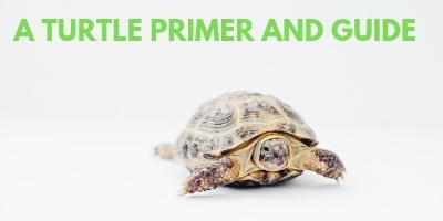 A Turtle Primer and Guide link picture