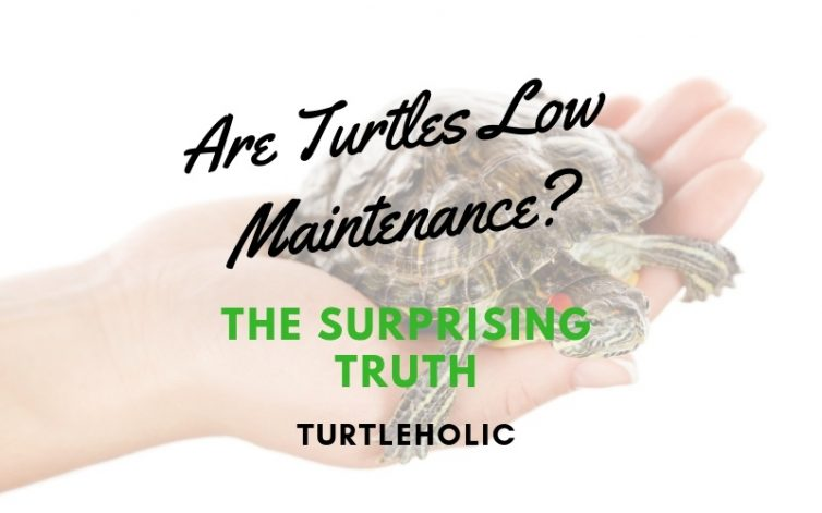 Are Turtles Low Maintenance - The Surprising Truth main picture