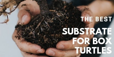 Best Substrate for Box Turtles