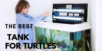 Best Tank for Turtles