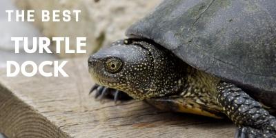 Best Turtle Dock