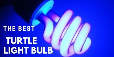 Best Turtle Light Bulb