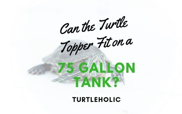 Can the Turtle Topper Fit on a 75 Gallon Tank main picture