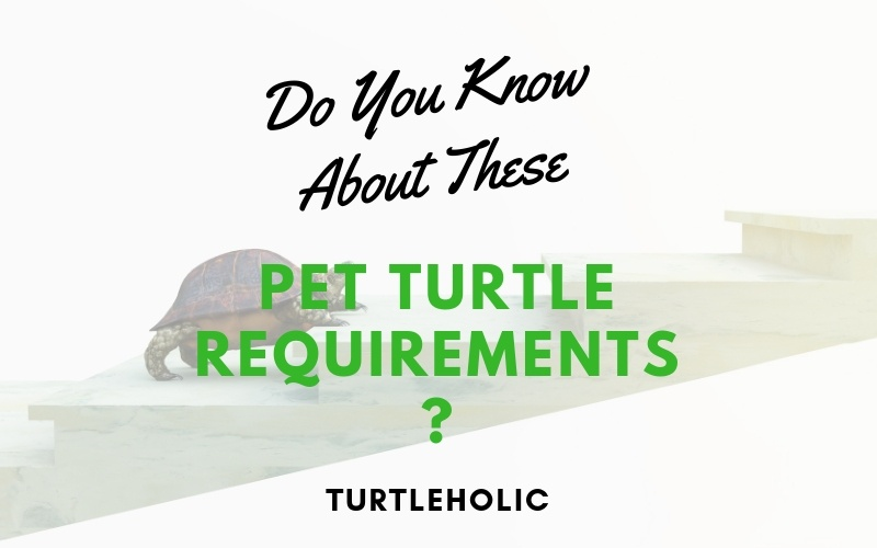 Do You Know About These Pet Turtle Requirements main picture