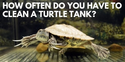How Often Do You Have to Clean a Turtle Tank link picture