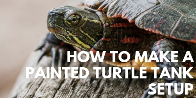 How to Make the Ideal Painted Turtle Tank Setup link picture
