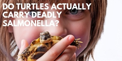Is It True Turtles Actually Carry Deadly Salmonella link picture