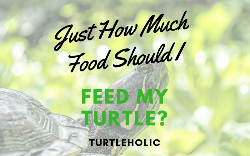 Just How Much Food Should I Feed my Turtle main picture
