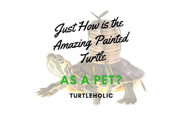 Just How is the Amazing Painted Turtle as a Pet main picture
