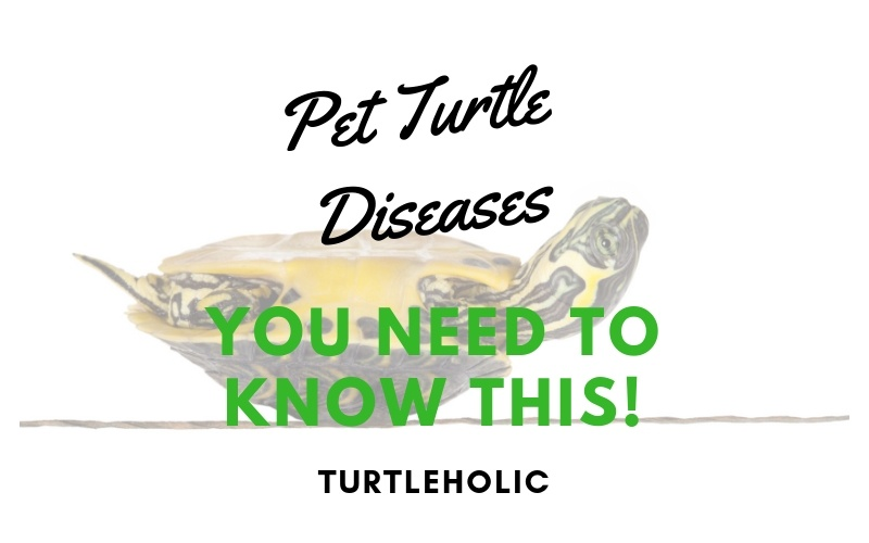 Pet Turtle Diseases - You Need to Know This main picture