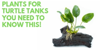 Plants for Turtle Tanks You Need to Know This link picture