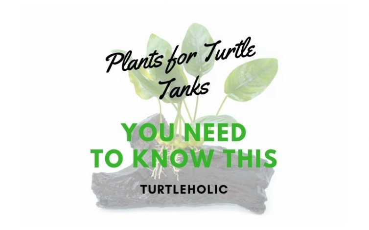 Plants for Turtle Tanks You Need to Know This main picture