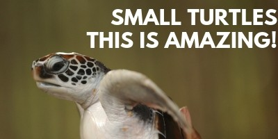 Small Turtles This is Amazing picture link